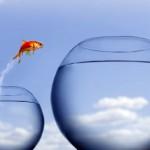 Transparenz und Visualisierung